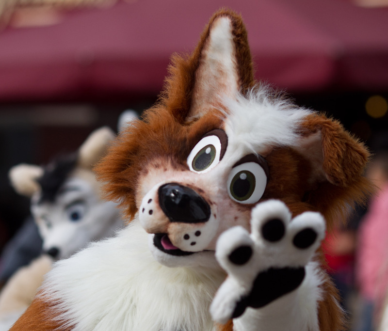 Furry at Eurofurence 2012 convention