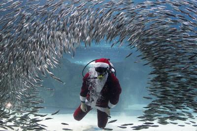 santa aquarium