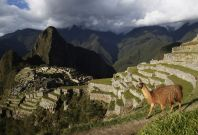 A llama is seen near the Inca citadel of Machu Picchu in Cusco, Peru. Machu Picchu, a UNESCO World Heritage Site, is Peru\'s top tourist attraction, with the government limiting tourists to 2,500 per day due to safety reasons and concerns over the preserv