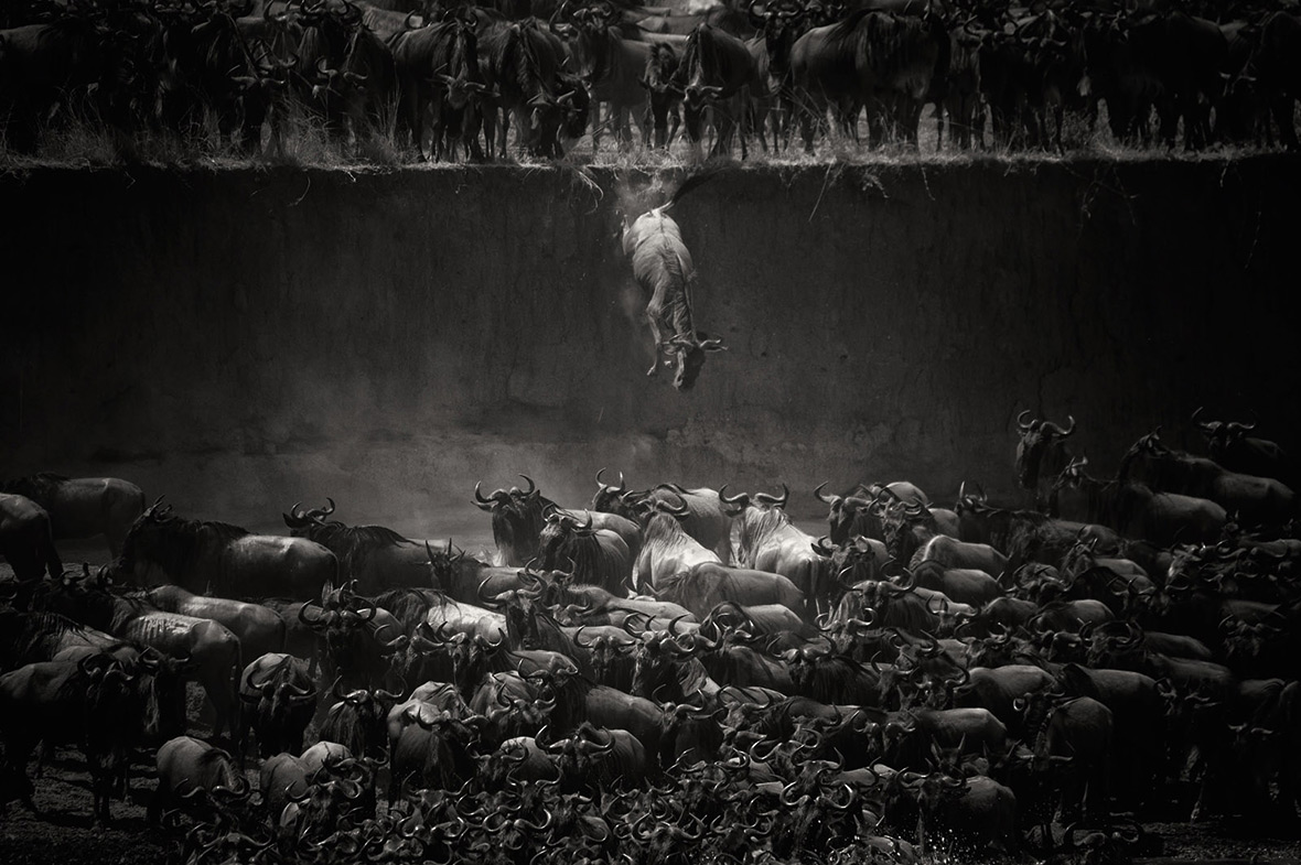 National Geographic Photo Contest 2014