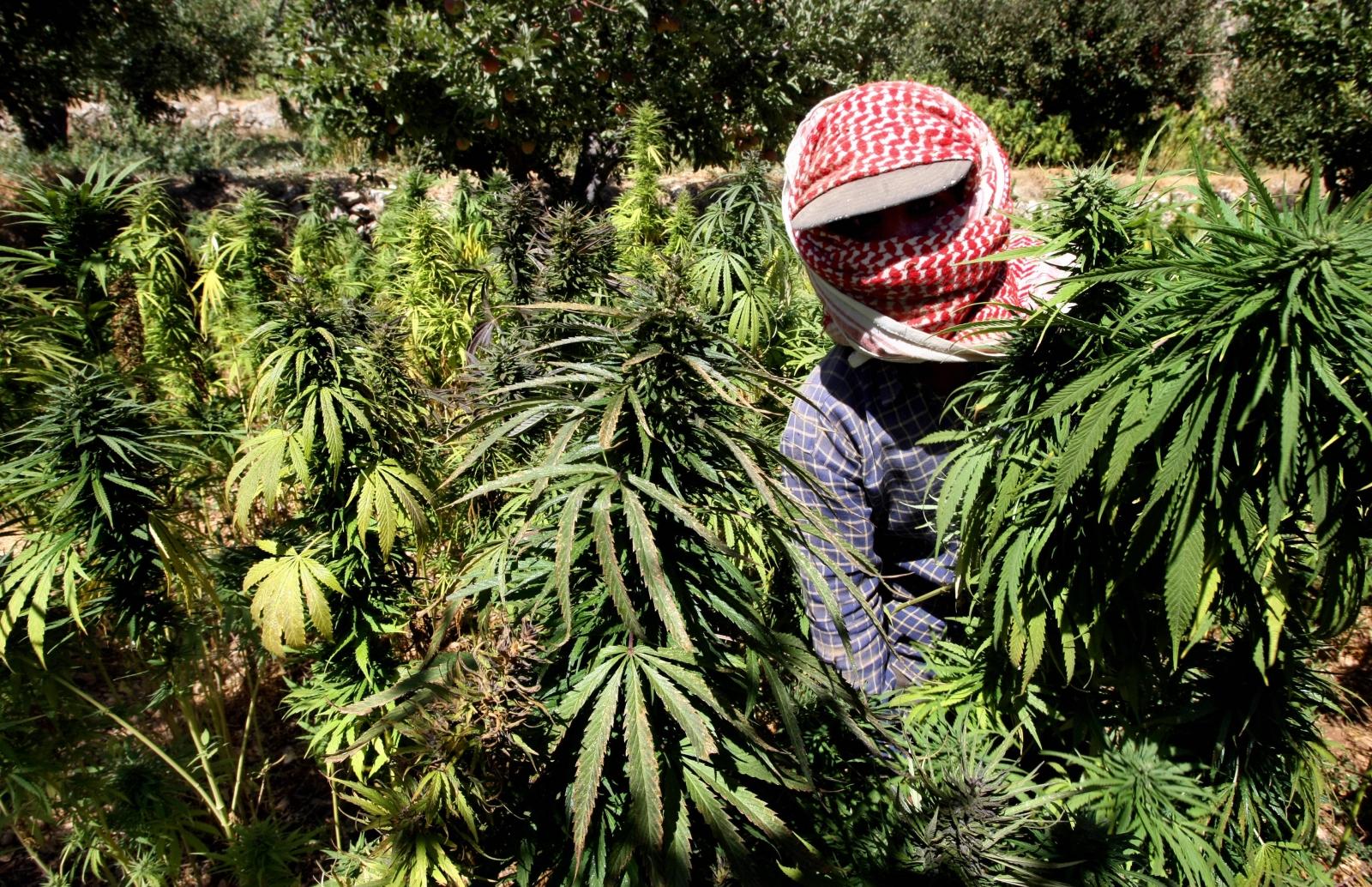 A marijuana farmer in Lebanon's Bekaa valley. (RAMZI HAIDAR/AFP/Getty Images)
