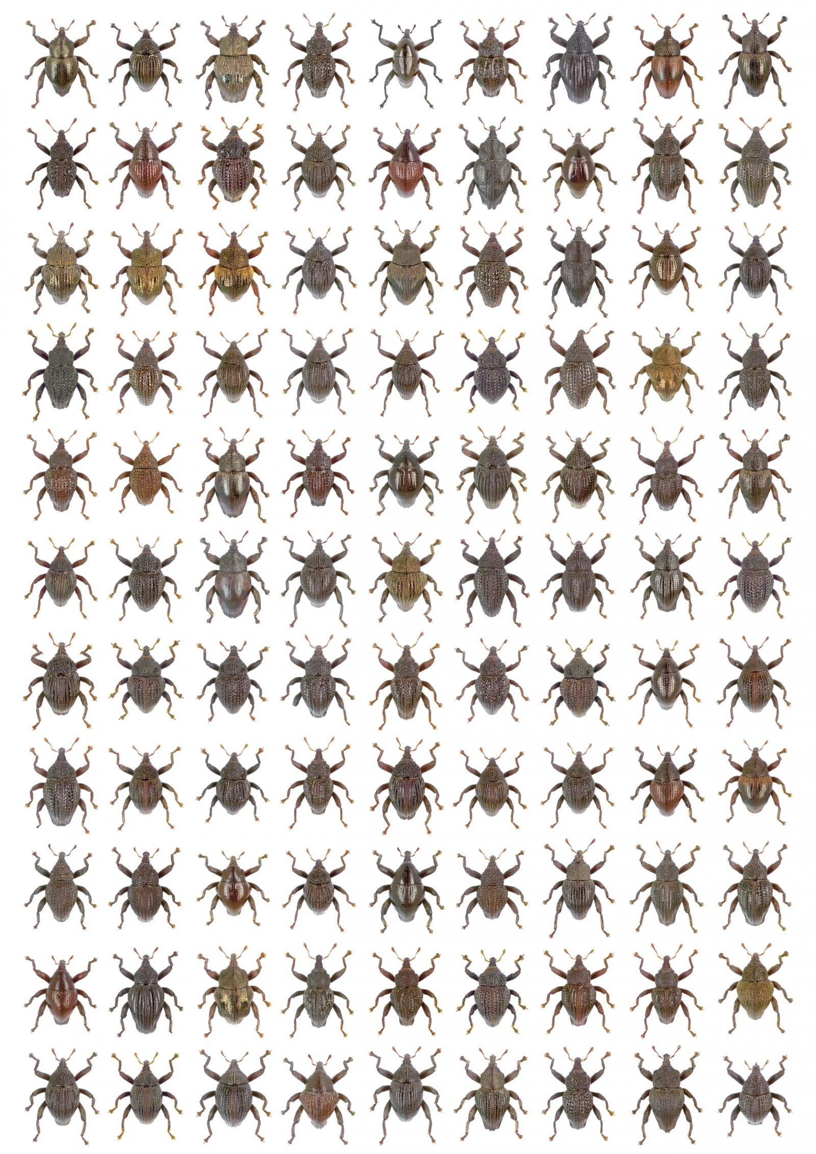 david attenborough beetle