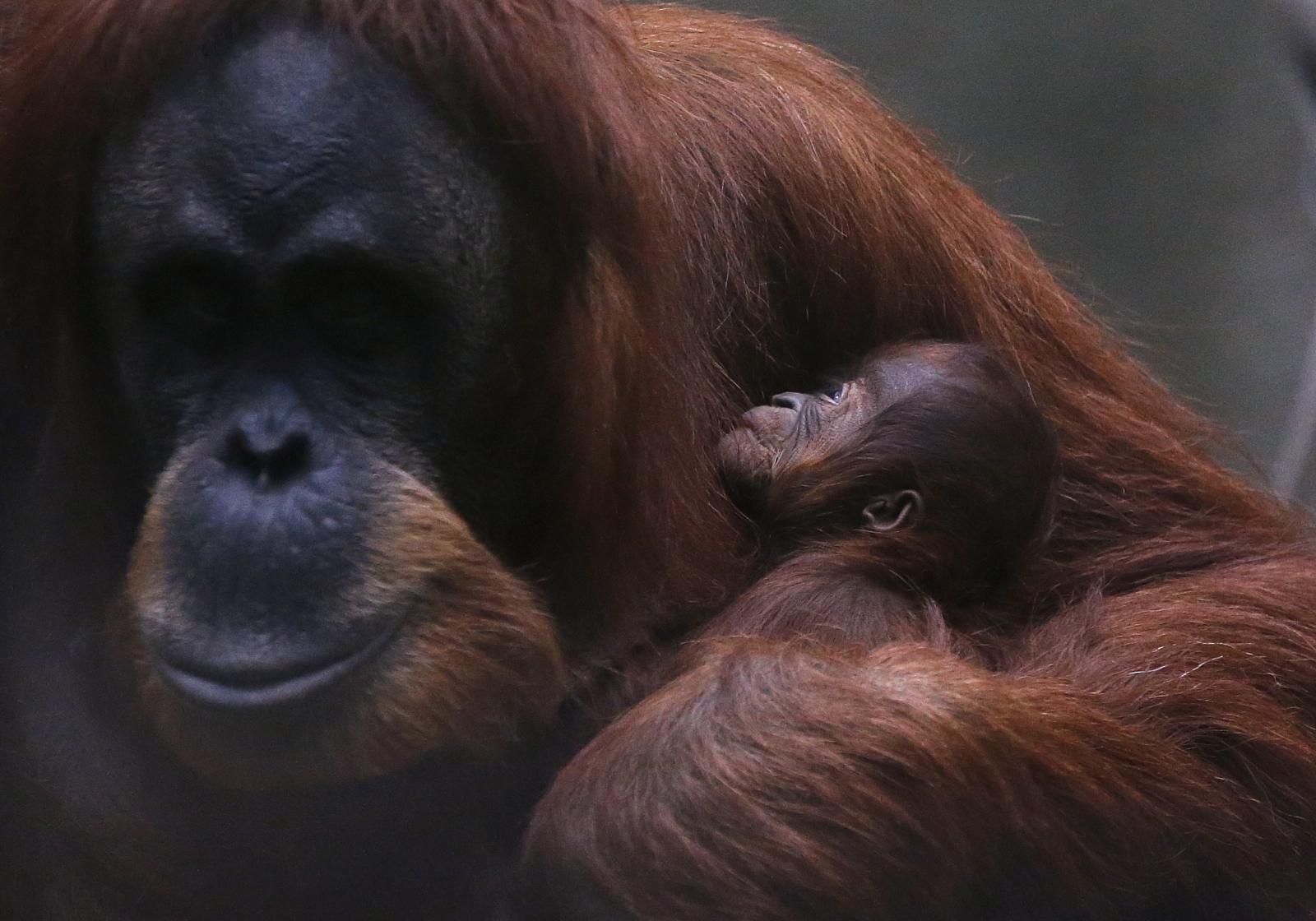 Half of world's primat...