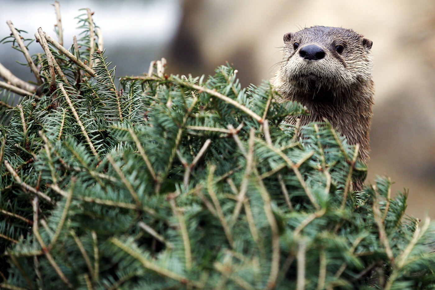 Animals of 2014 - River otter