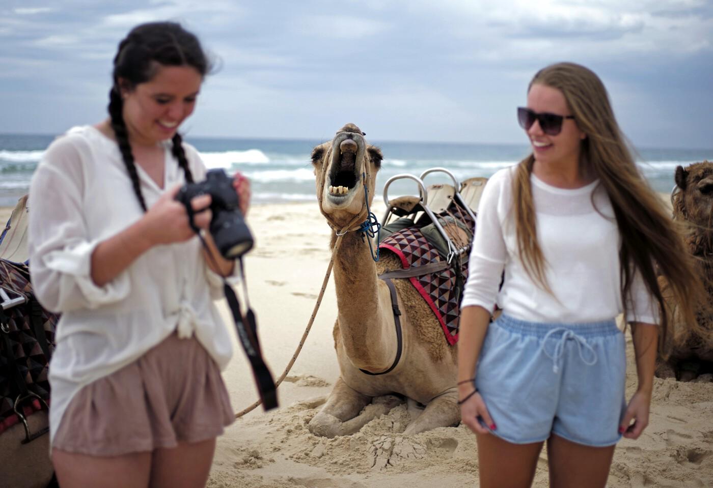 Animals of 2014 - Camel photobomb