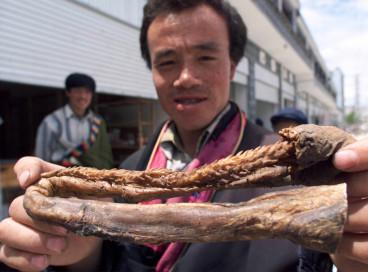 Tiger penis Xu China chinese traditional medicine
