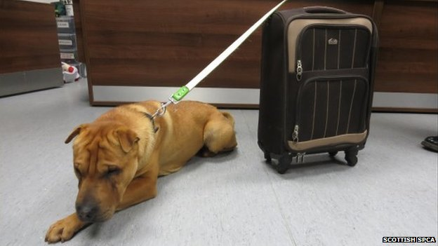 A male Shar-Pei dog was abandoned outside a Scottish railway station, tied to a suitcase with all his belongings, including dog bowl