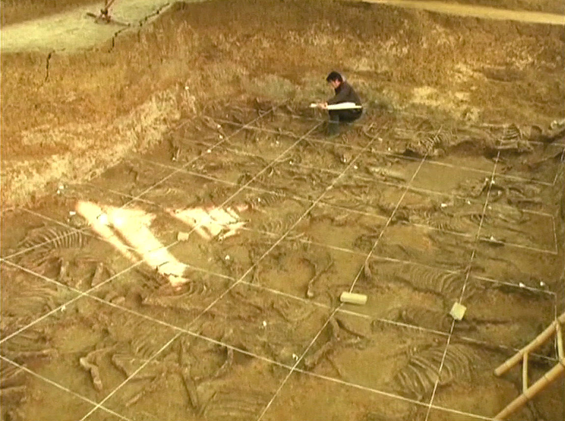 At least 49 pairs of horse skeletons (98 horses in total) were buried together in a pit. Two horses would have pulled a chariot together