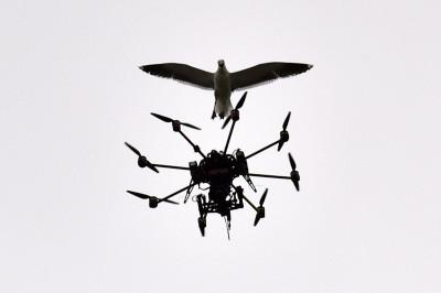 cricket drone seagull