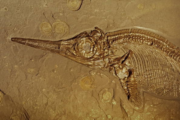 What are the different dating methods of fossils