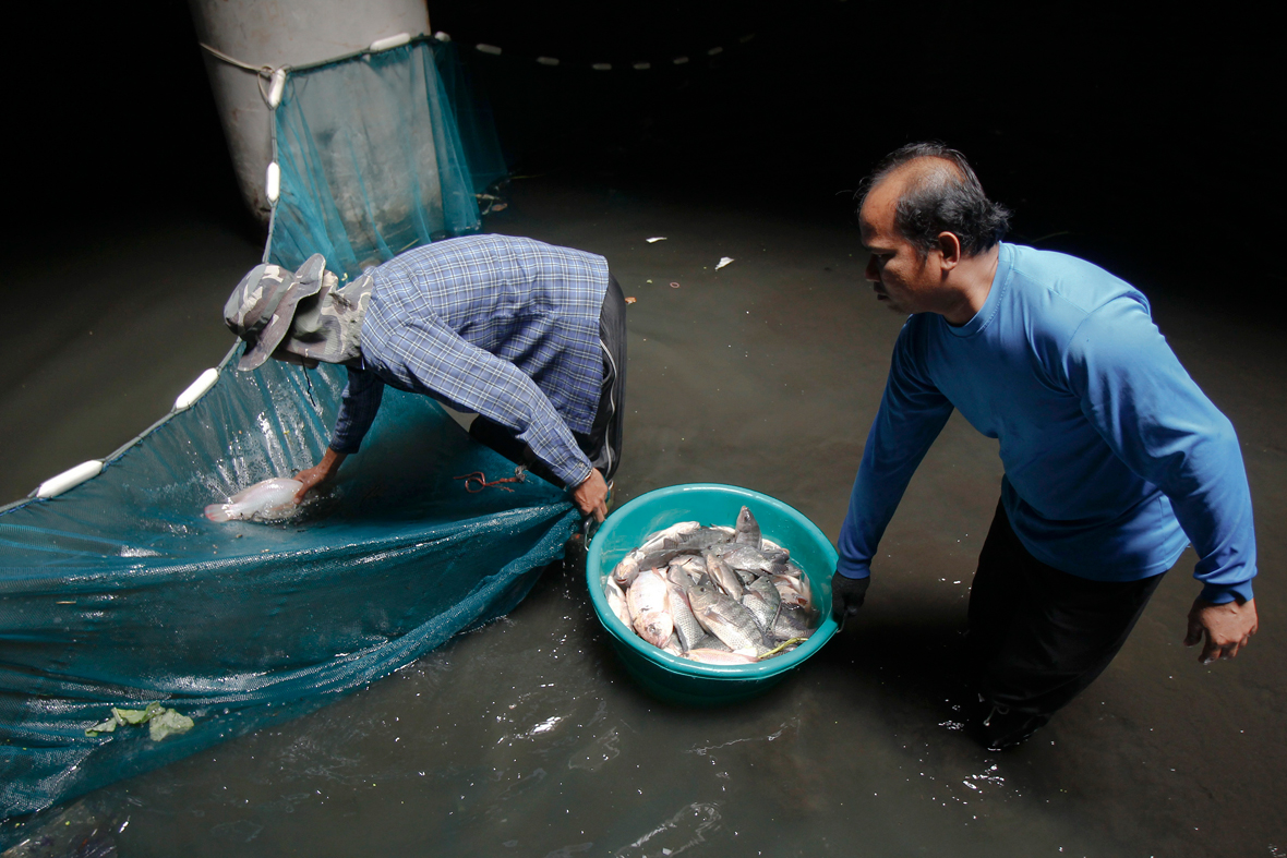 Thailand: Workers catch 3,000 fish in the flooded abandoned New World shopping centre in Bangkok