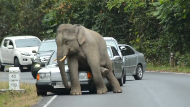 Car damaged in Thailand after elephant goes on rampage