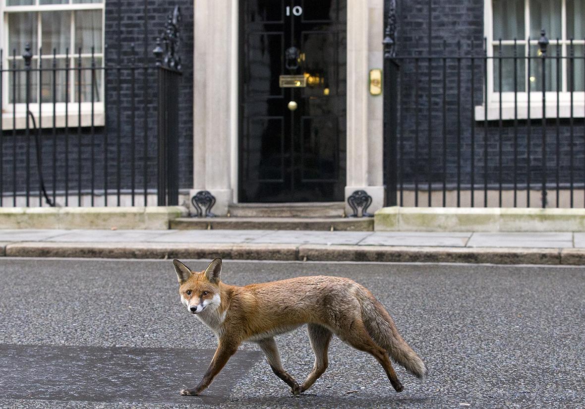 fox downing street