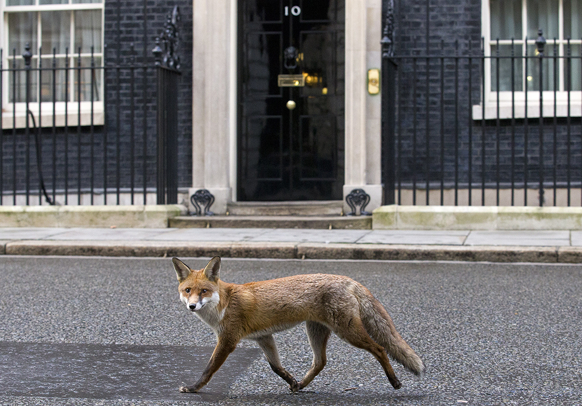 fox downing street