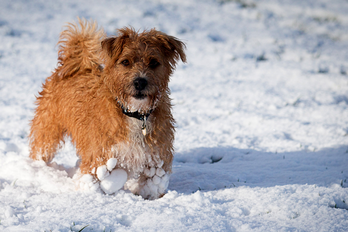'Don't stop retrieving': Firefighters scoot across frozen creek to rescue terrified dog