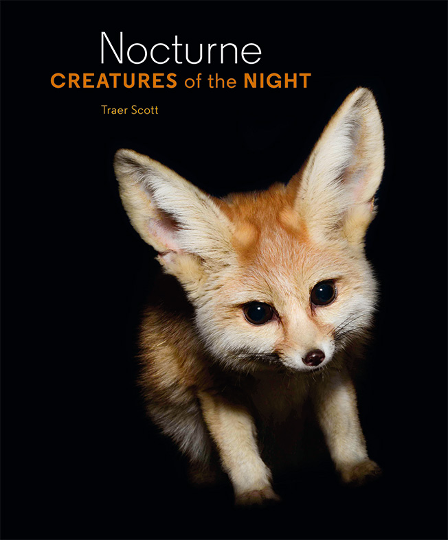 Nocturne Creatures of the Night by Traer Scott