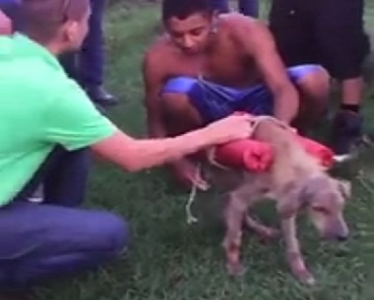 Dog appears to be strapped with explosives by youths who flee after lighting the fuses