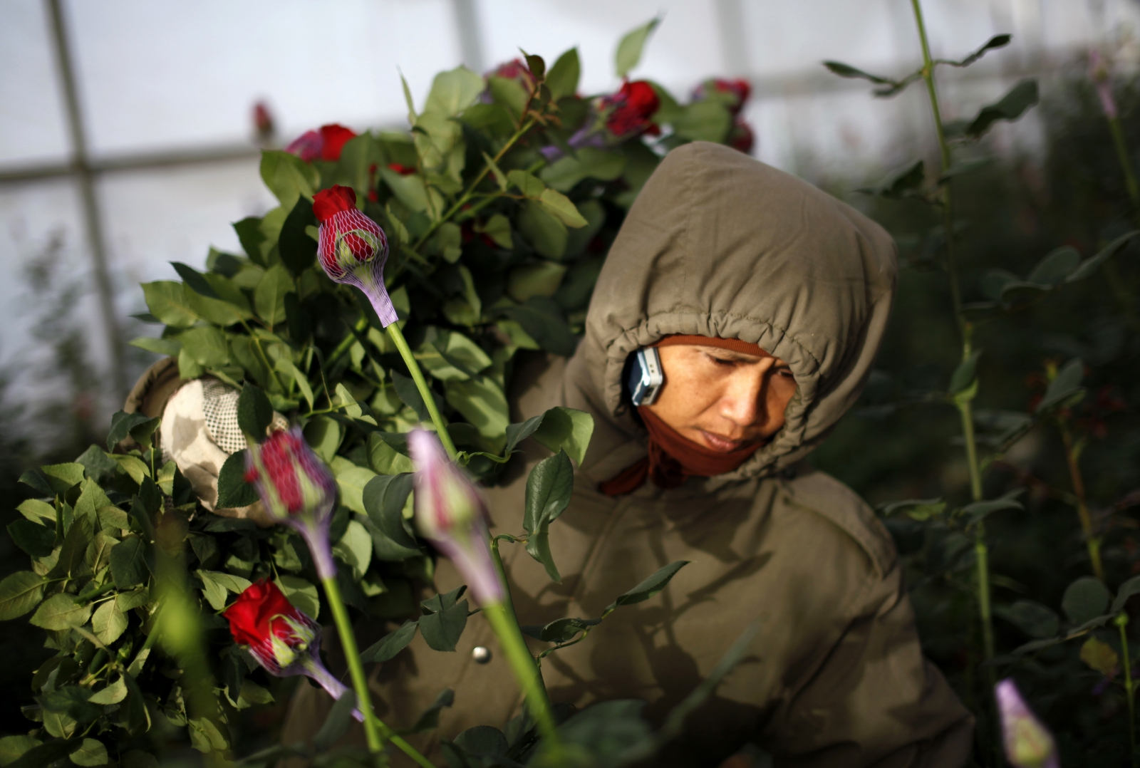 Israel Thai labourer