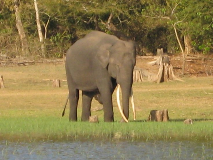 wildlife conservation in india Link for national park is   link for wildlife sanctuary is: .
