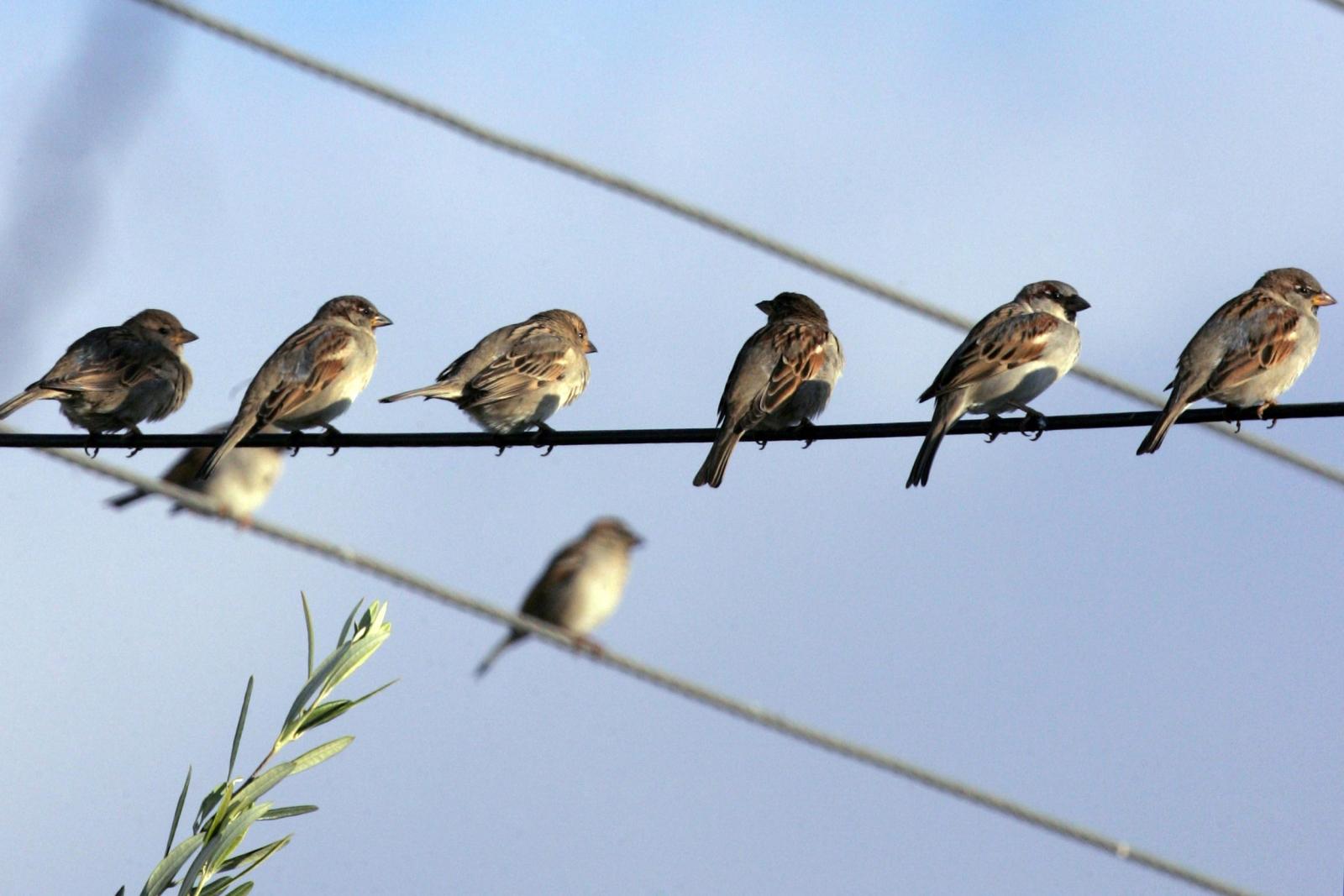 Birds on wire Amman