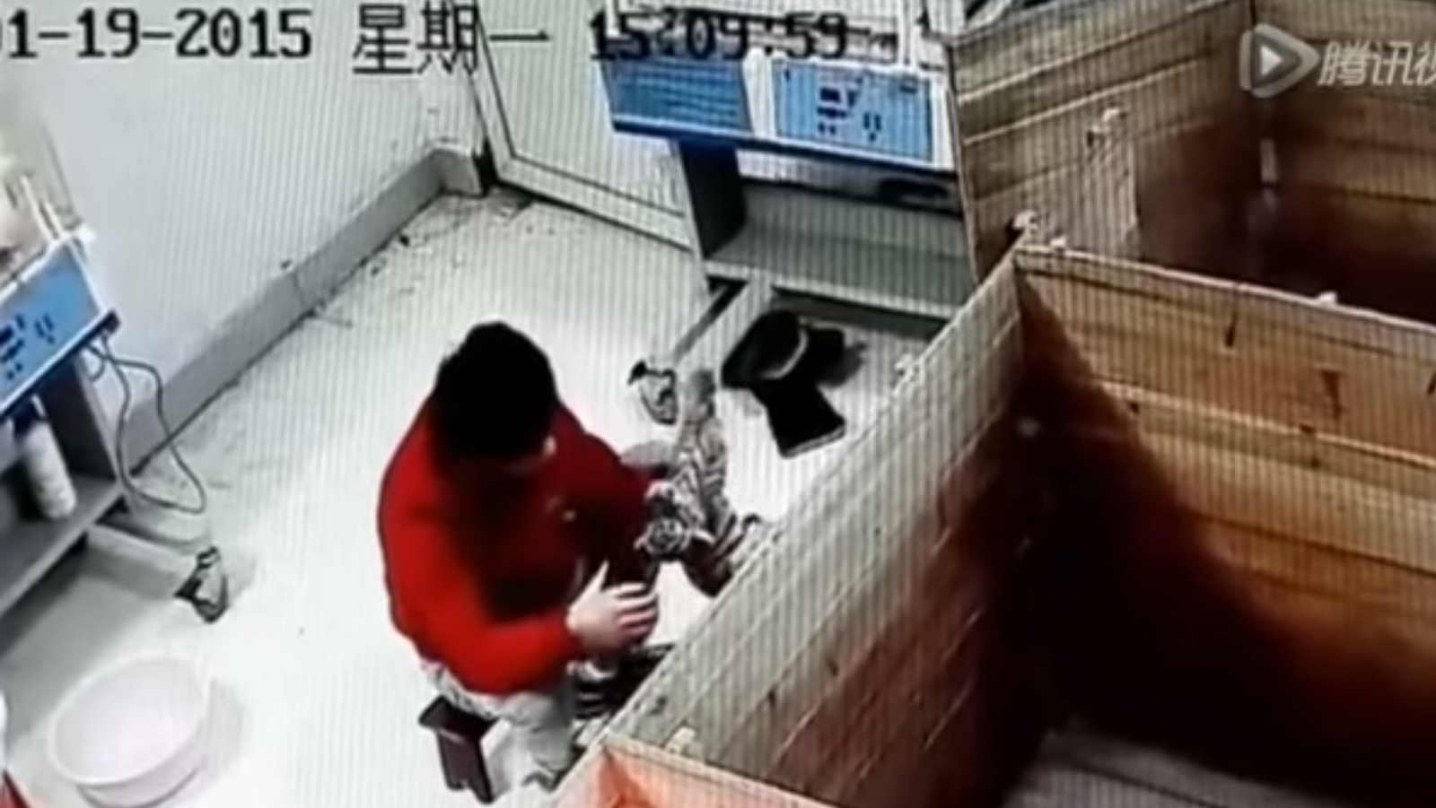 Man abusing a tiger cub