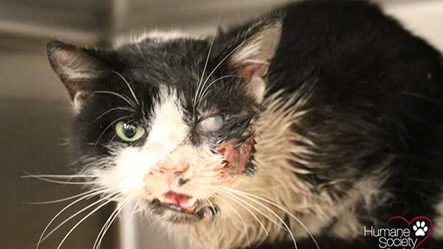Bart the cat survived horrific injuries after being hit by a car