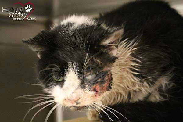 Florida cat claws his way out of his own grave after being buried alive