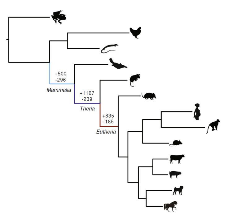 pregnancy evolution