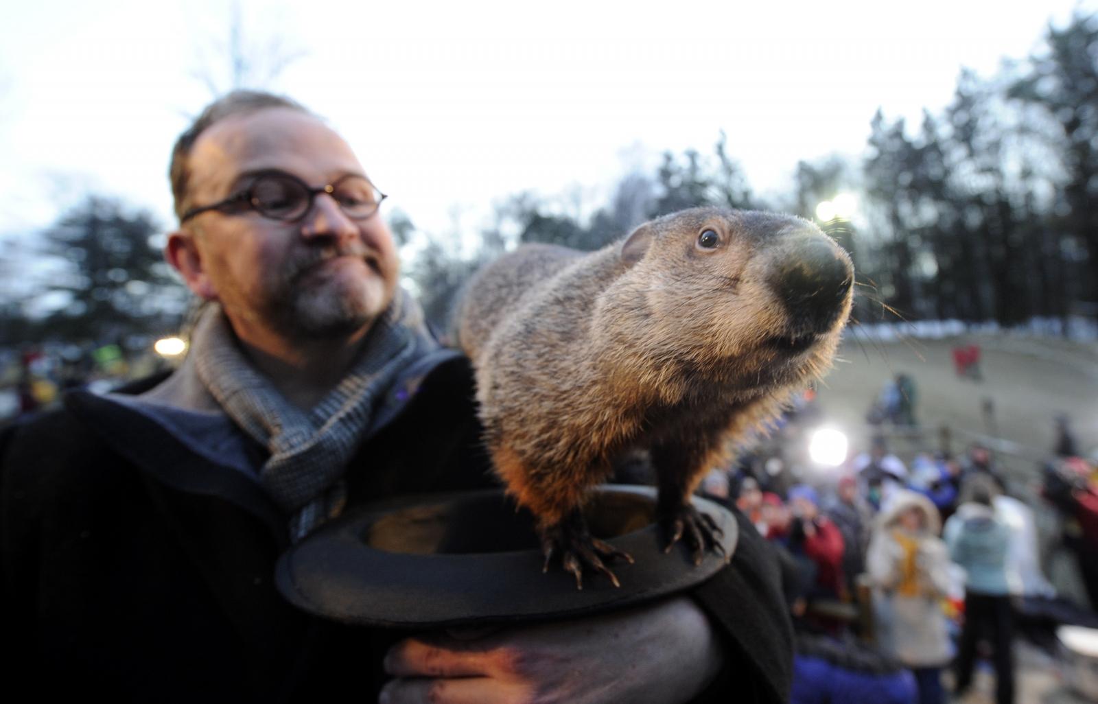 groundhog