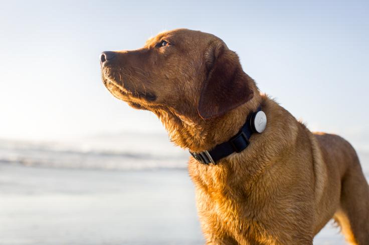 Whistle dog fitness tracker