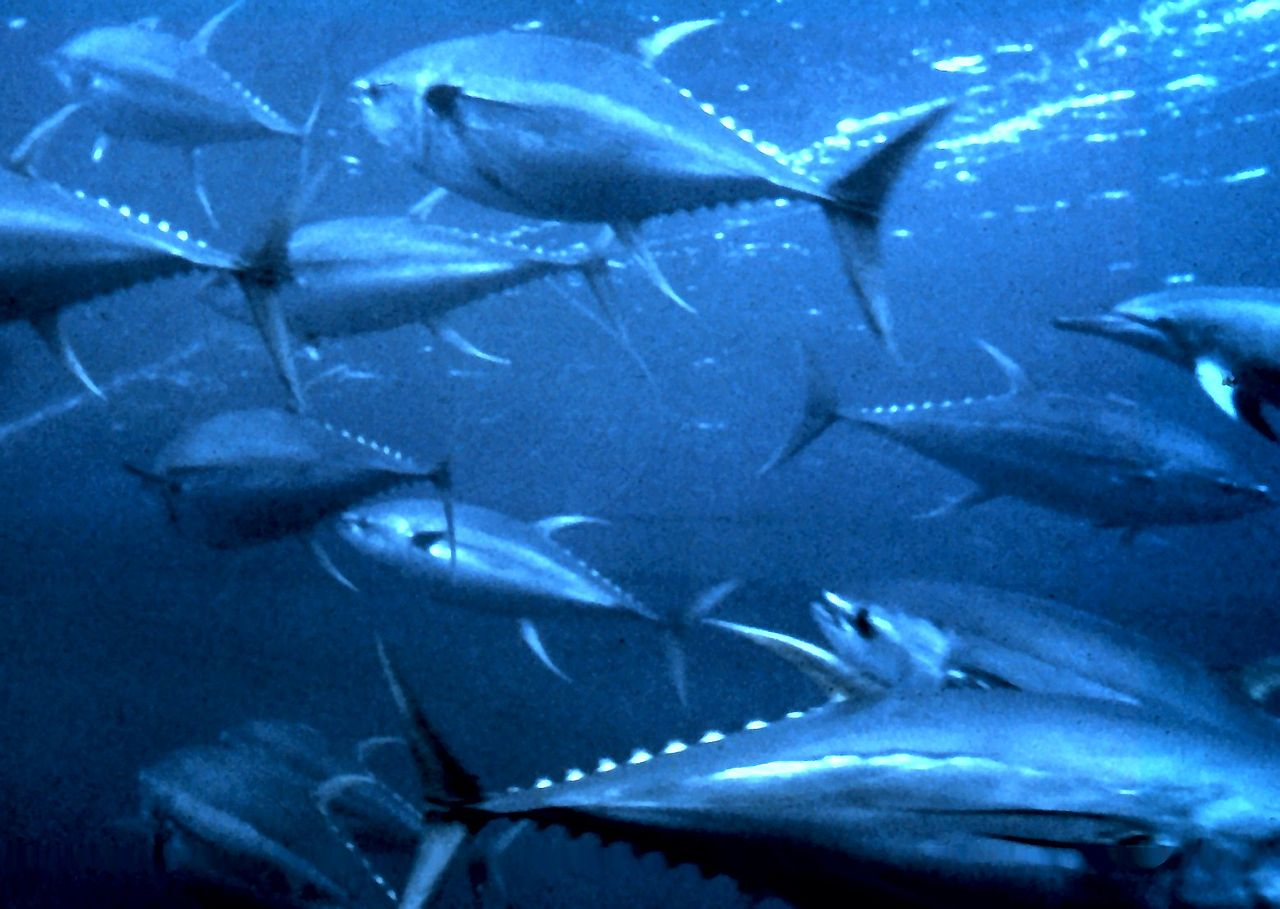 Mercury levels in north pacific to double by 2050 study for Fish with least mercury