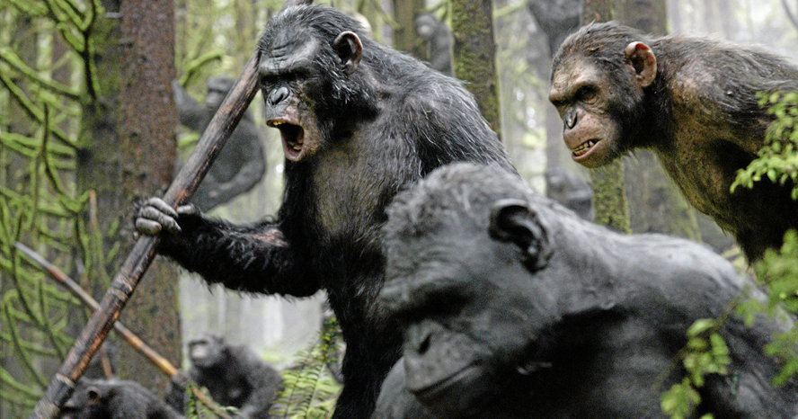 Scientists say primates evolved to use tools like spears to hunt for food instead of biting in close contact conflicts,