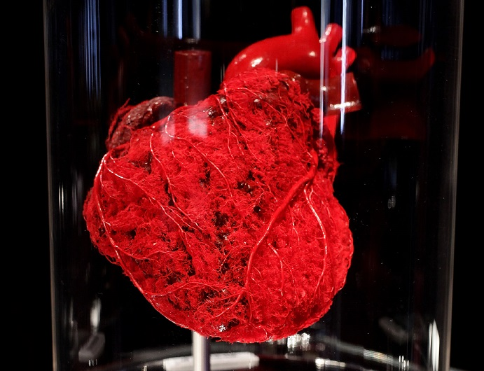 Former rival researchers use stem cells to repair hearts