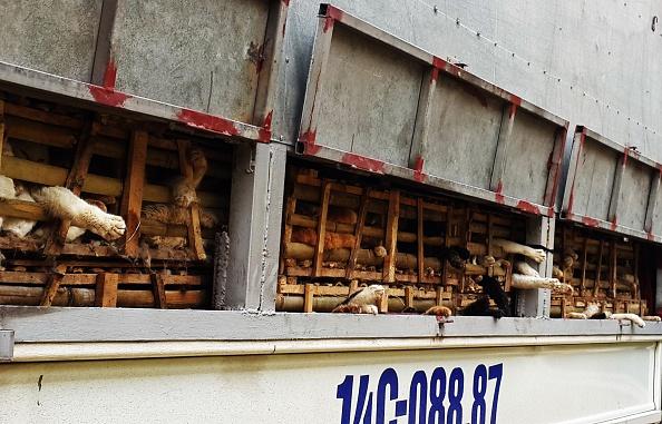 Vietnam buries thousands of cats alive