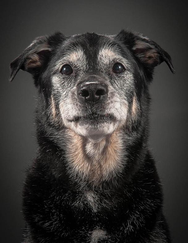 Old faithful dogs