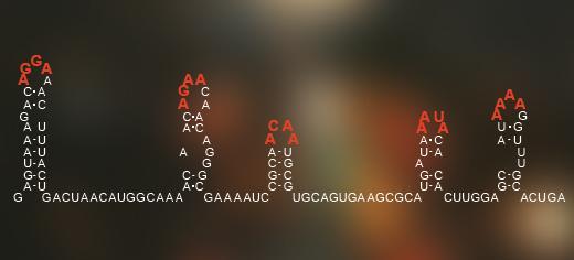 RNA CODE