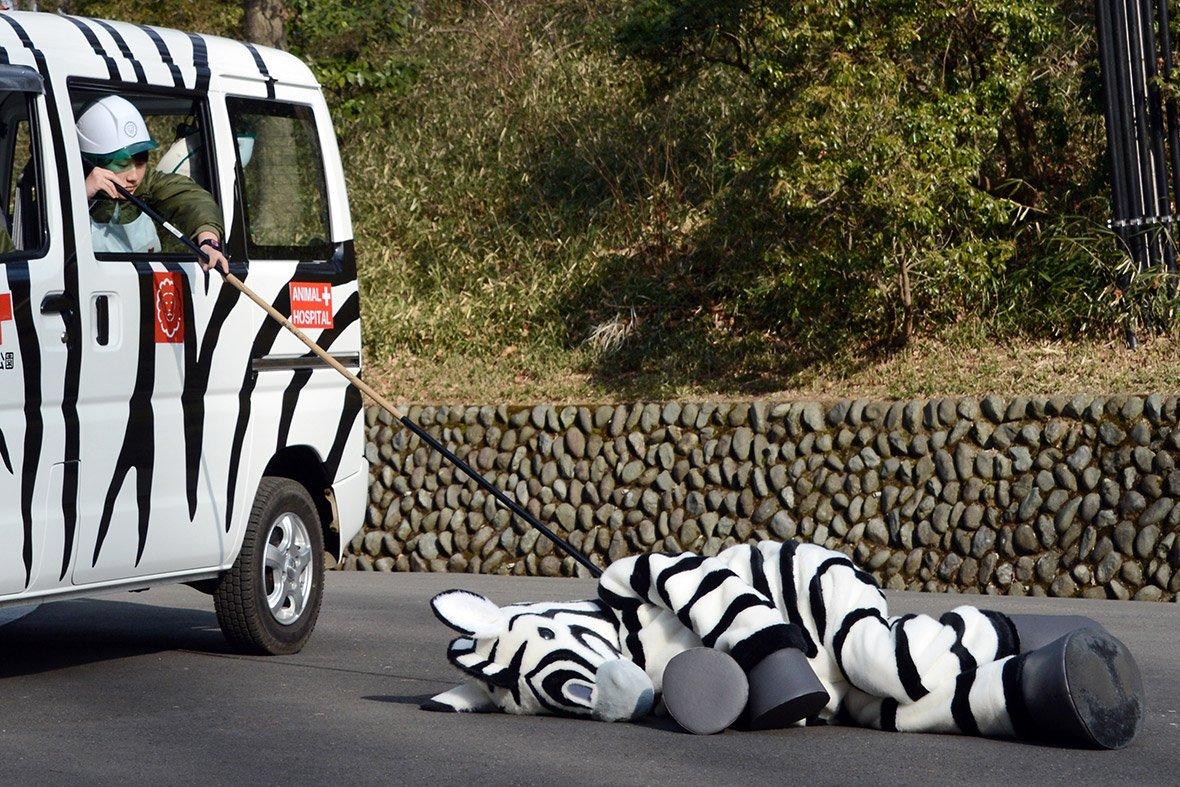 japan zoo escaped animal drill