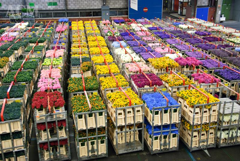 World's biggest flower market gears up for Valentine's Day