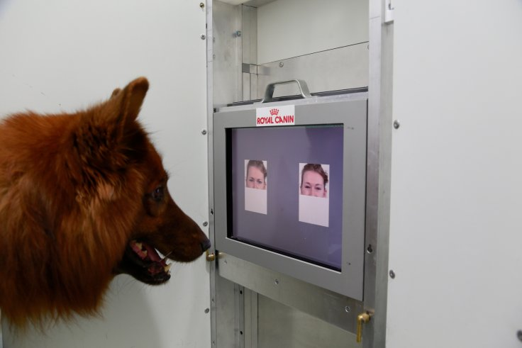 Dogs Can Discriminate Emotional Expression