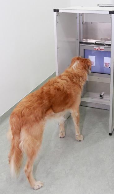 dogs sensing human faces