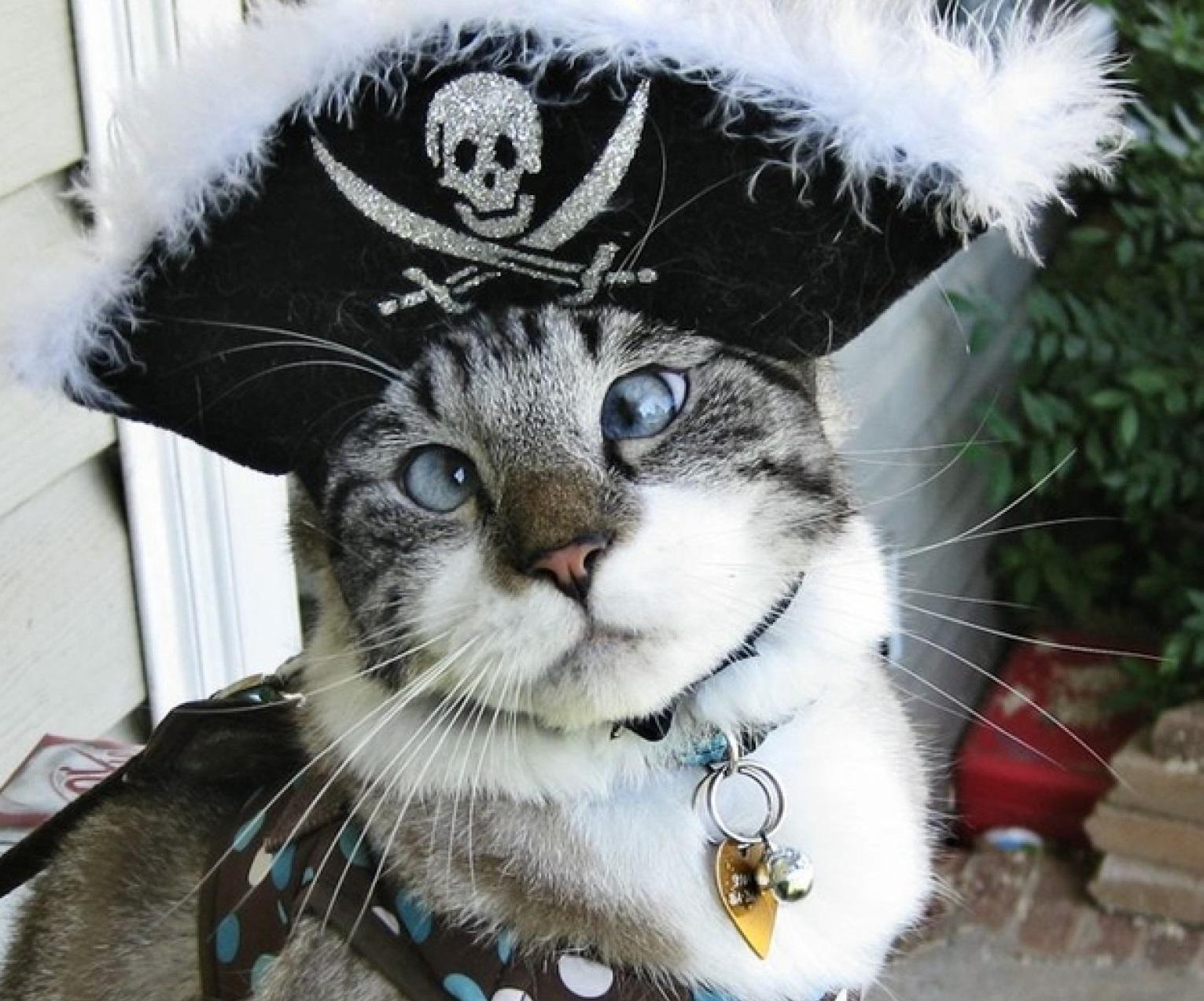 cat purring youtube copyright phantom