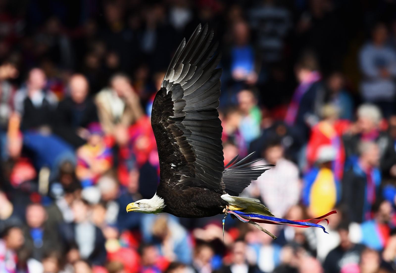 Crystal Palace eagle