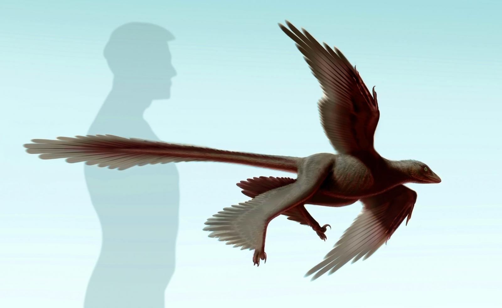 Changyuraptor yangi