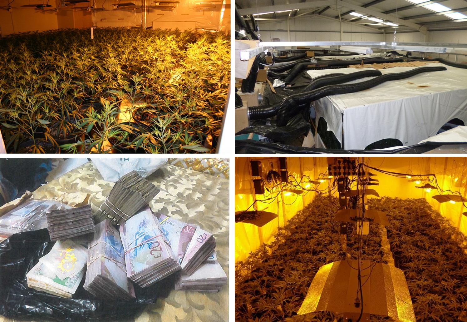 Cannabis empire
