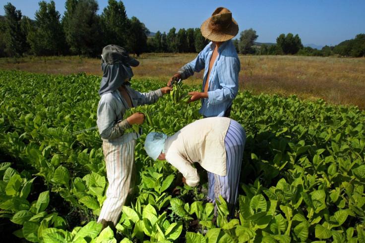 Bulgaria tobacco industry
