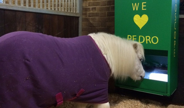 Children design periscope for Shetland pony so that he can see outside his stable