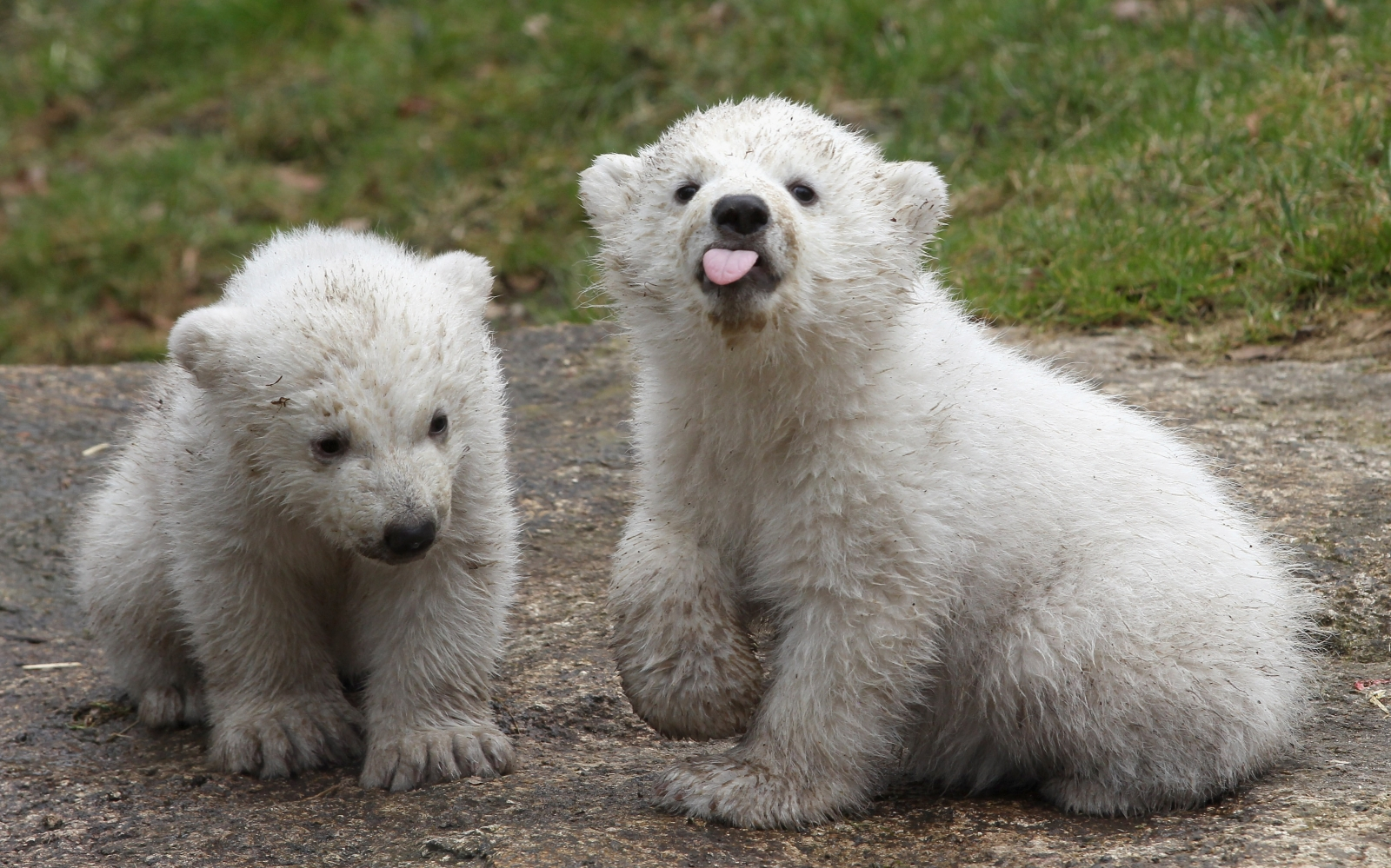 International Polar Bear Day 2015: Facts, Conservation And