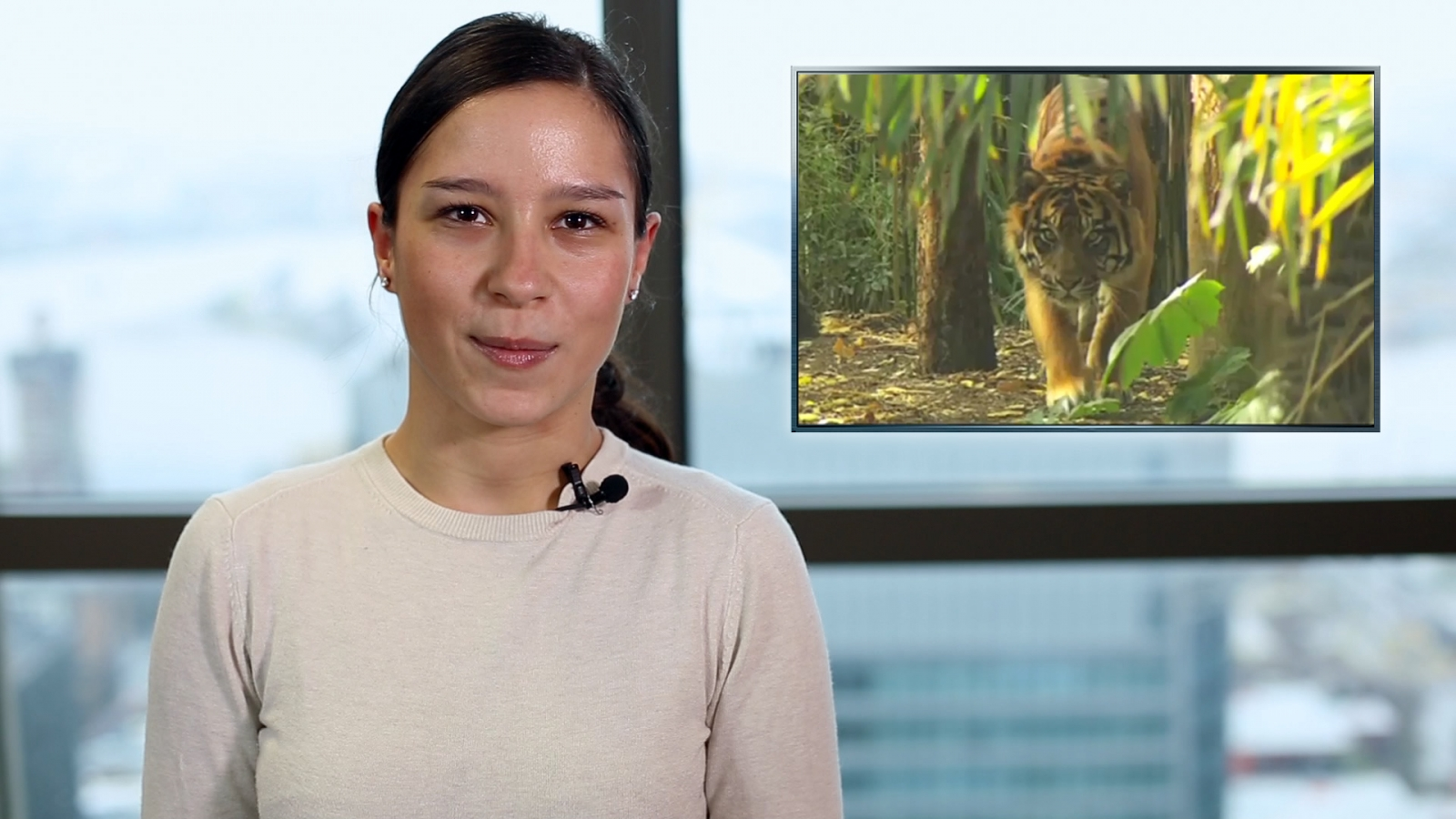 World Animal Protection Interview