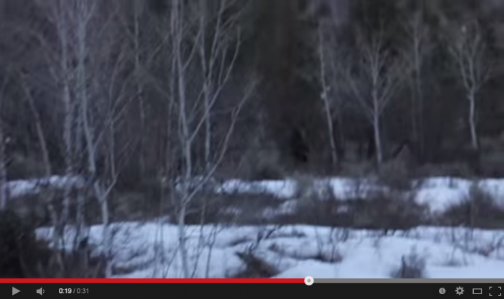 Bigfoot sighting in American Fork Canyon? Video of \'Sasquatch\' caught on camera goes viral