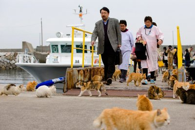 Aoshima cat island Japan